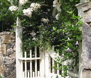 Arbor with climbing rose and clematis